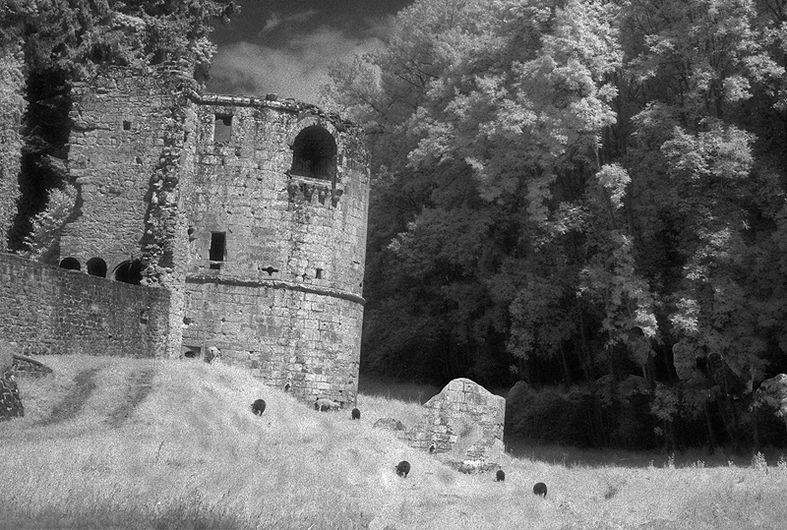 Ruined Beauty - Limited Edition Photographic Art by Christopher Strong